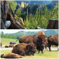 6 - Custer Sate Park