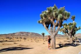 26 - JTNP (ein Tree und ich)