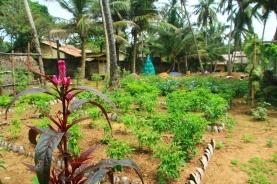 herbal-garden