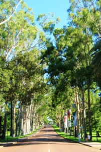 Perth Kings Park Allee