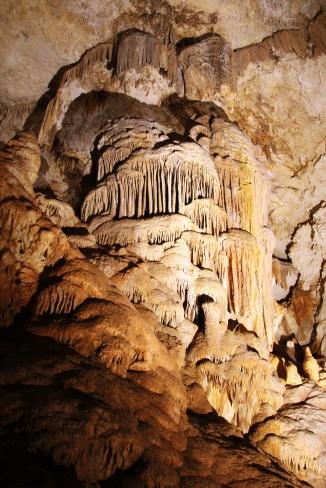 Caves - tree