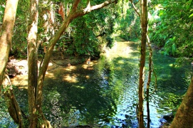 Daintree - Swimming hole