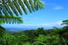Daintree - View point