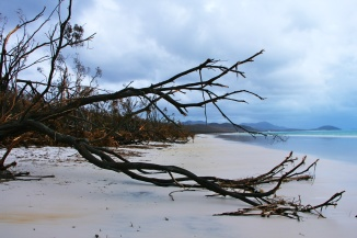 Debbie - armer Whiteheaven Beach