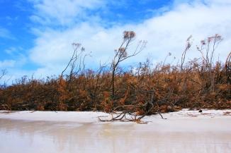 Debbie - Whiteheaven Beach vom Winde verweht