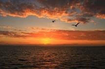 Sailing - Sunset2