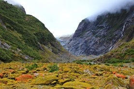 Franz Josef - Valley Walk